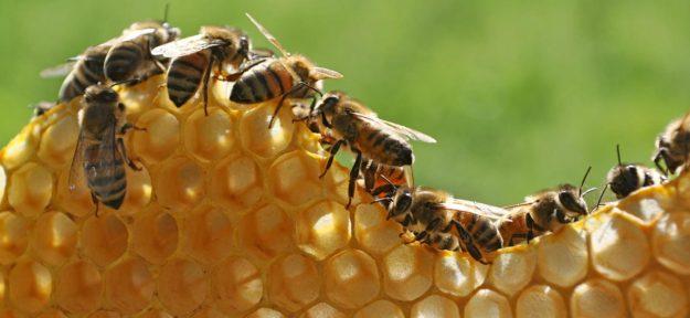 La primera red mundial de colmenas con IA ayuda a la conservación de la población mundial de abejas en declive