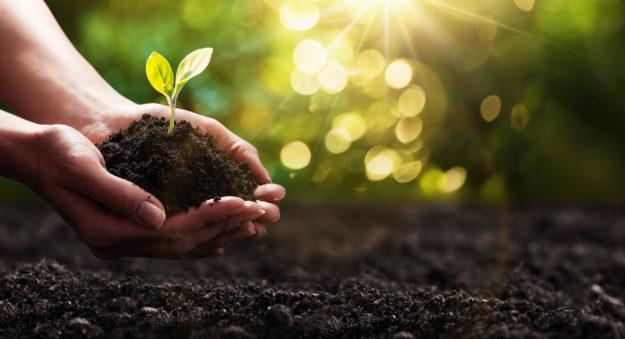 La Inteligencia Artificial que detecta las plantas en peligro de extinción